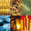 Las materias primas en 2014