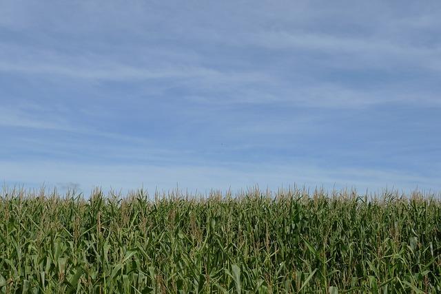 Materia prima agrícola